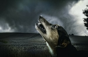 К чему воет собака ночью? приметы и народные суеверия